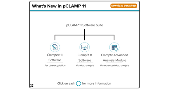 pCLAMP 11